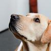 Seeing Eye Dog 2012