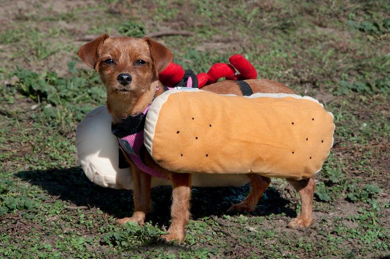 """Radar as a """"Hot Dog"""""""