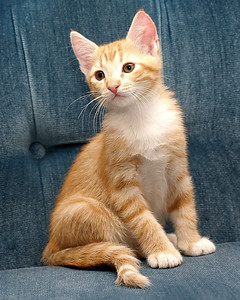 Butterfly (about 7 weeks old) poses for one last portrait before her new family came to pick her up.
