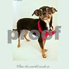 Spike_stylish dogs humility