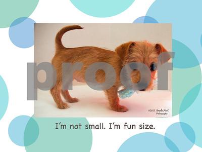 Shelter Animal Photography