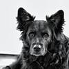 Fotograf på Österlen i Skåne – levande djur porträtt