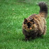 Cat on the Prowl