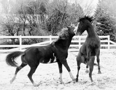 Rumbling Stallions II