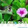 AsamiOda2s