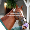 California Chrome trained by Art Sherman