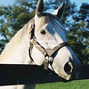 1997 Silver Charm  at Three Chimneys Farm