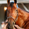 2015 Triple Crown winner American Pharoah