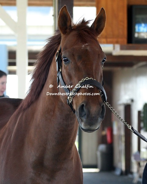 2003 winner Funny Cide at his home at the Kentucky Horse Park