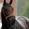 2010 Super Saver trained by Todd Pletcher