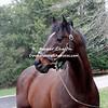 2000 Fusaichi Pegasus