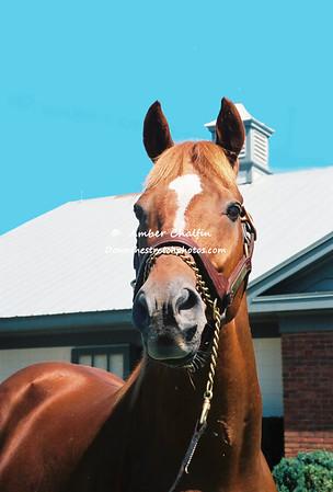 Portraits of Kentucky Derby Winners
