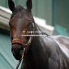 2010 Winner -Super Saver trained by Todd Pletcher