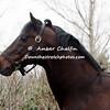 2000 Winner Fusaichi Pegasus
