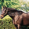 1977 Triple Crown winner Seattle Slew