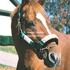 1978 Triple Crown winner Affirmed