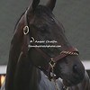 2007 Kentucky Derby Winner Street Sense