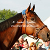 2015 Kentucky Derby winner American Pharoah
