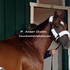Animal Kingdom  at Pimlico