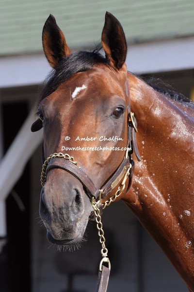 2008 Winner Big Brown