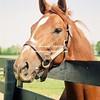 1999 Winner Charismatic