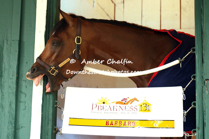 2006 Derby Winner  Preakness Morning