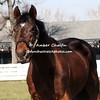 1987 winner - Alysheba
