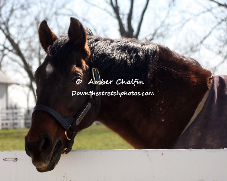1987 winner Alysheba
