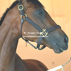 2006 Derby Winner