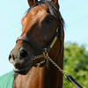Nyquist trained by Doug O'Neill