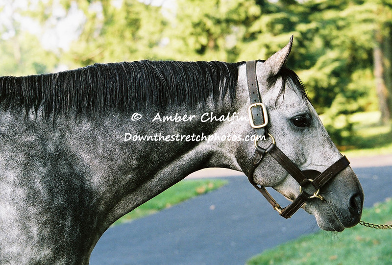 2001 Winner Monarchos