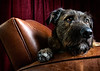 Big the dog