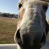 Big Donkey Nose<br /> 1st Place Winner