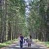 Prevost trail -003