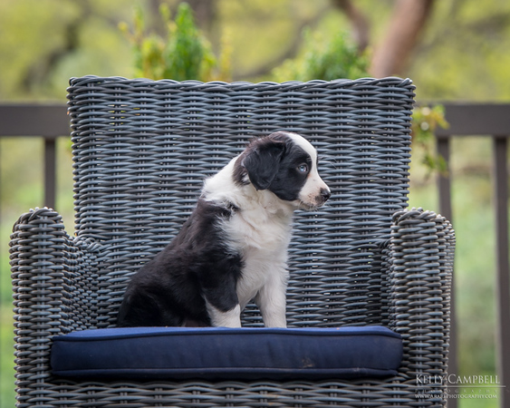 Ray's Puppies-Dogs-127