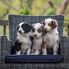Ray's Puppies-Dogs-117