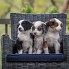 Ray's Puppies-Dogs-119