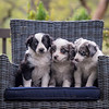 Ray's Puppies-Dogs-116
