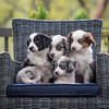 Ray's Puppies-Dogs-122