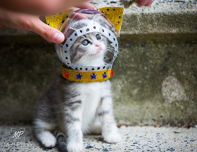 Space Kittens-064