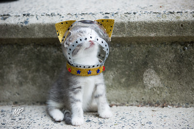 Space Kittens-066