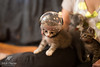 Space Kittens-164