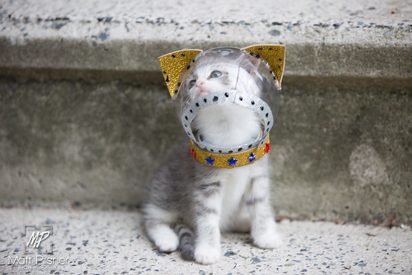 Space Kittens-070