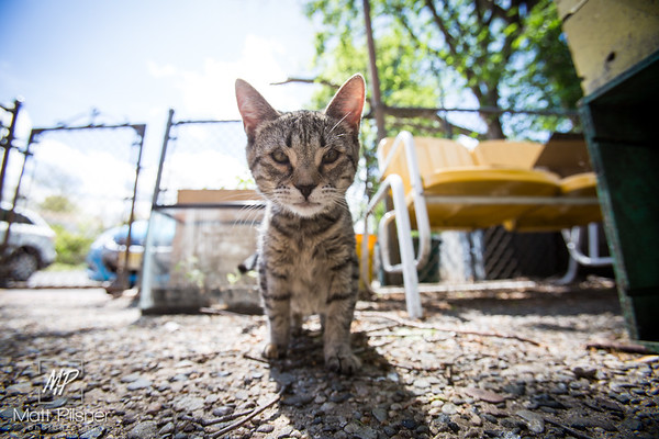 549-Donner-Kittens-May8-2016