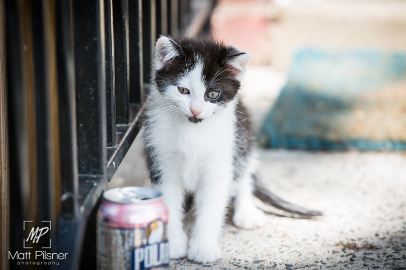 533-Donner-Kittens-May8-2016