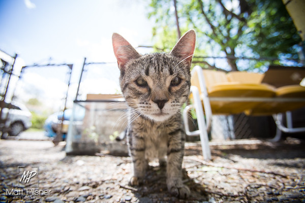 547-Donner-Kittens-May8-2016