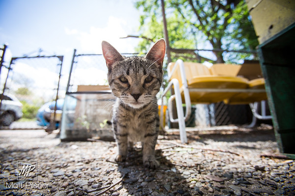 548-Donner-Kittens-May8-2016