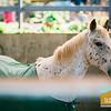 Sea Horse Ranch Family Photos_007