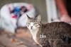 Corrina-Oakley_Senior-Photos-5189_09-23-15  by Brianna Morrissey  ©BLM Photography 2015