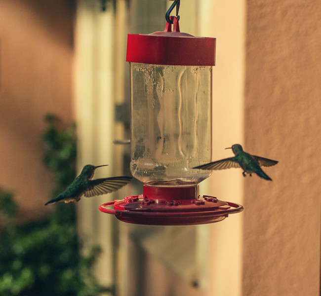 Two little hummers